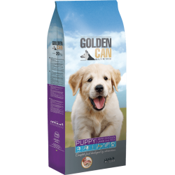 ORTIN GOLDEN CAN PUPPY